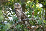 Golden Gate Park Owls
